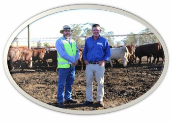 thousand Guineas feedlot